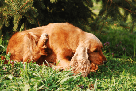 Signs Your Pet May Have Allergies